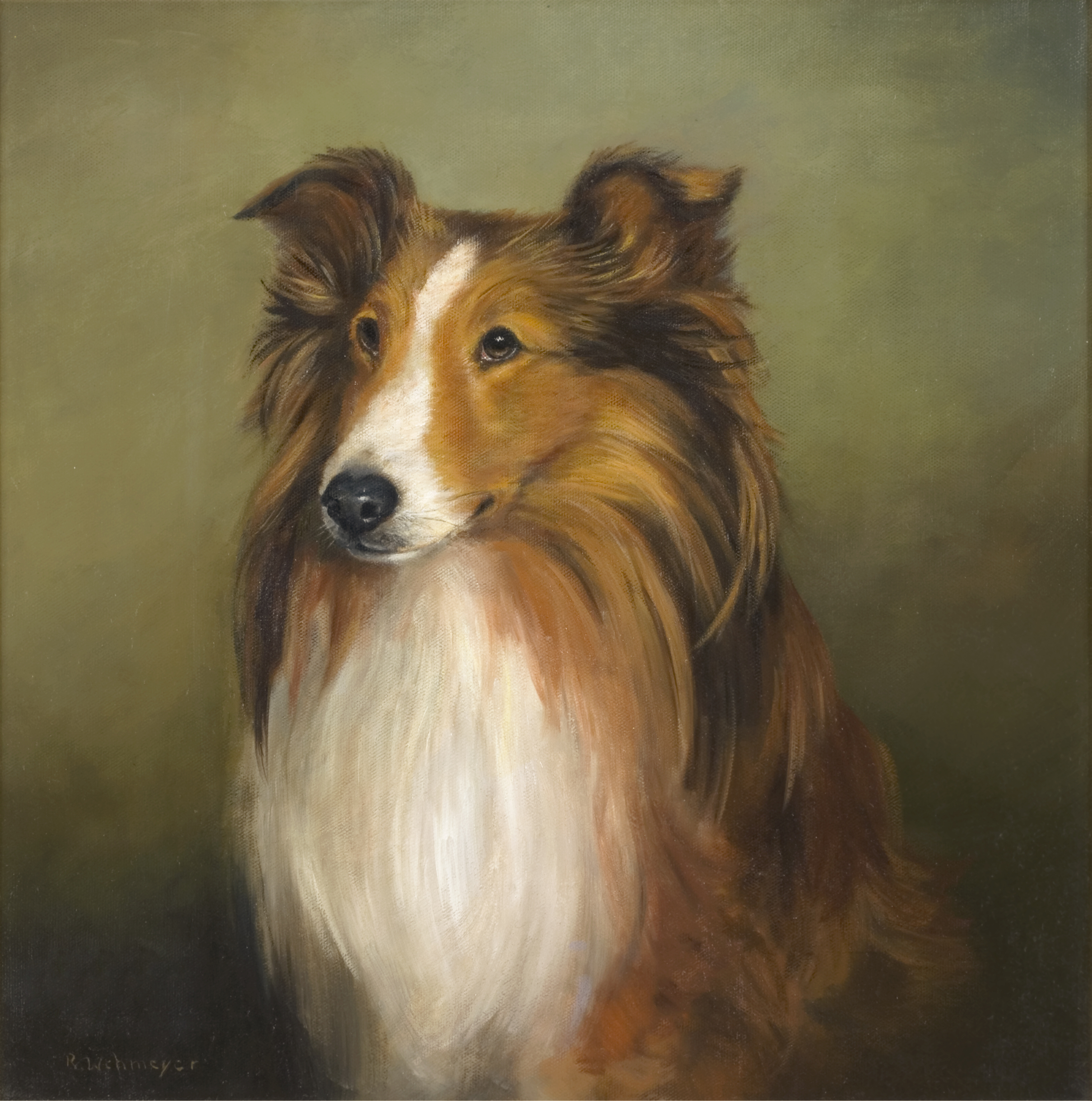 Shetland Sheepdog portrait painting